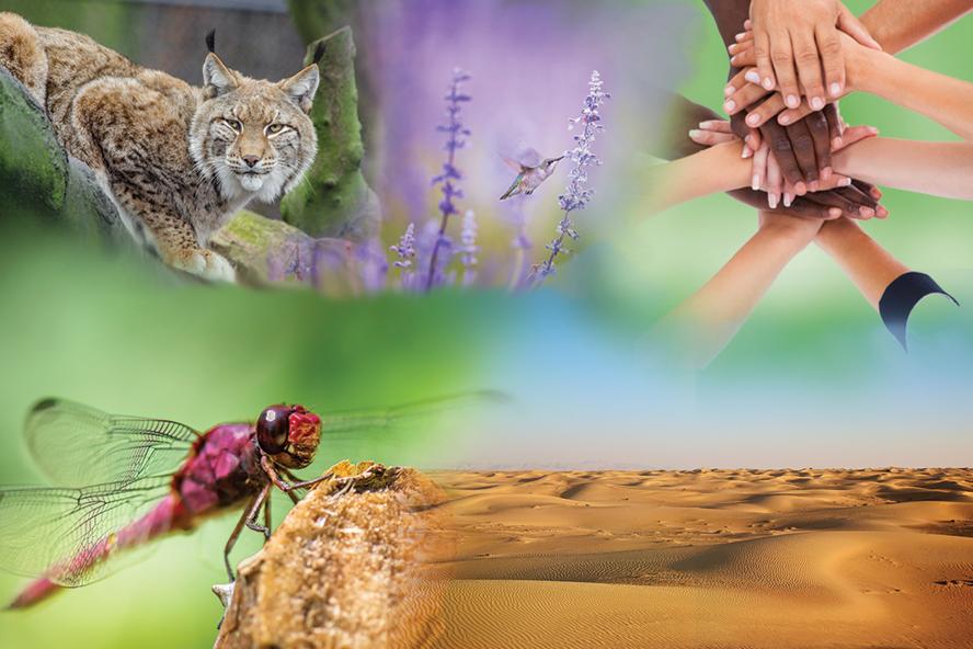 IPBES Biodiversity